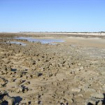 Hamelin Pool Stromatolithen