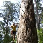 Eisenstufen Dave Evans Bicentennial Tree