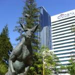 Känguru mitten in Perth