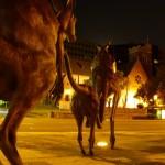 Perth bei Nacht Kängurus