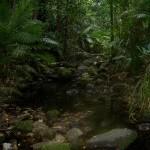 Mossman Gorge - Creek