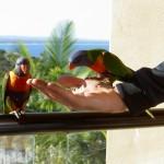 Papageien auf der Hand