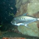 Unterwaterworld Fisch