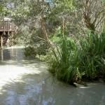 Fraser Island 4WD Tour Eli Creek - Blick von Ende Boardwalk abwärts