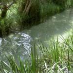 Fraser Island 4WD Tour Eli Creek - klares Wasser