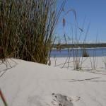Fraser Island 4WD Tour Lake Boomanjin - Blick auf See aus Düne