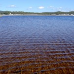 Fraser Island 4WD Tour Lake Boomanjin - rotes Wasser 1