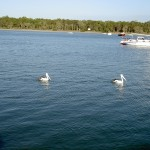 Rainbow Beach Tin Can Bay - Pelikane auf Wasser