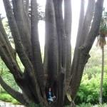 Melbourne Baum