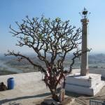 beim Hanuman Tempel