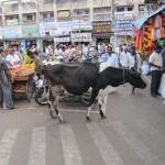 Indien Kuh in der Stadt