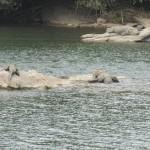 Krokodil Südindien