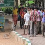 indische Kinder mit Afffe