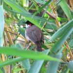 vögel indien