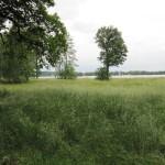 Schlosspark Sacrow